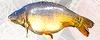 Šalčininkų žuvininkystės ūkis, UAB darbo skelbimai